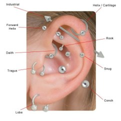 Different Ear Piercings Diagram Wiring For A 7 Way Trailer Plug What Are The Types Of Cartilage Quora There To Many Explain So Here S