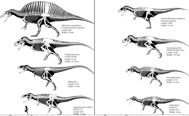 Who would win in a fight Mapusaurus or Giganotosaurus or