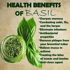 What is the name of basil leaves in the Urdu language? - Quora