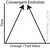 What are some examples of convergent and divergent
