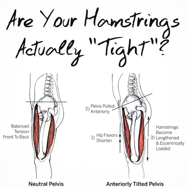 Is stretching your hamstring everyday good for flexibility