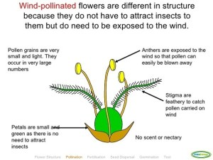 How is the stamen of a plant adapted for pollination?  Quora