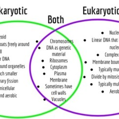 Venn Diagram Of Animal Cell And Plant Narva Light Switch Wiring Are Prokaryotes More Complex Than Eukaryotic Cells? - Quora