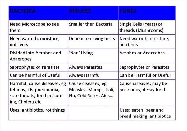 Virus And Bacteria Size Chart