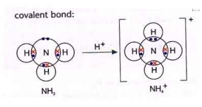 electron dot diagram of nh3 1998 ford ranger 4x4 wiring why does [math]\require{mhchem}\ce{nh3}[/math] act like a base in water? - quora