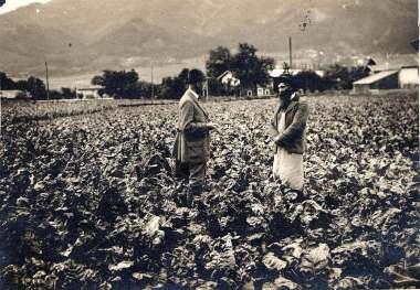 Kohlgasse 1930