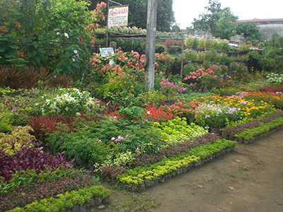 Flowering plants for sale