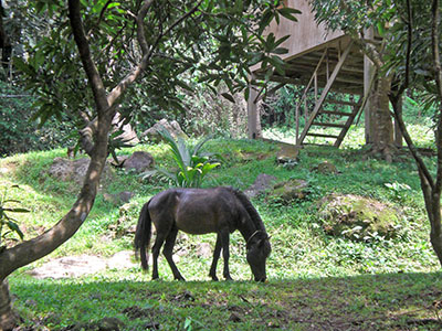 Nice horsey...