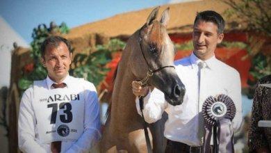 Photo of النتائج النهائية لبطولة منتون 2020 الدولية لجمال الخيل العربية الأصيلة