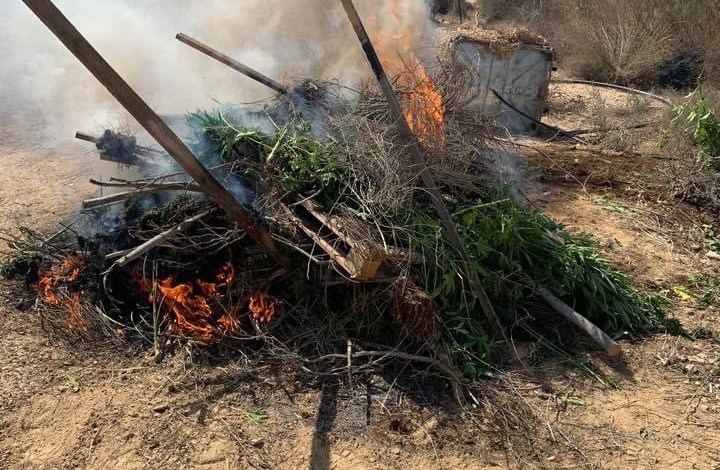 صورة افراد شرطة الحدود ضبطوا ودمروا 41 دفيئة مشتبهة لترويج المخدرات الخطرة في مناطق لتدريب الرماية لجيش الدفاع في منطقة الجنوب