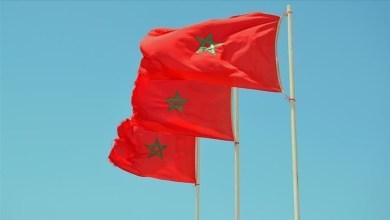 صورة المغرب.. اكتشاف نجم بحر أحفوري يعود إلى 480 مليون سنة