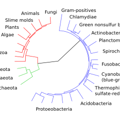 Lab Tree Diagram Viper Winch Wiring Ap Biology Mr Szeryk 39s Qsib Classes Page 2