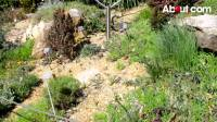 How to Build a Rock Garden | Qtiny.com