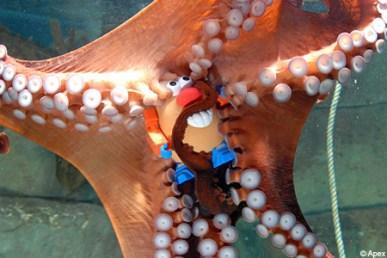 octopusax_450x300