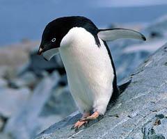 penguin-city-facts0