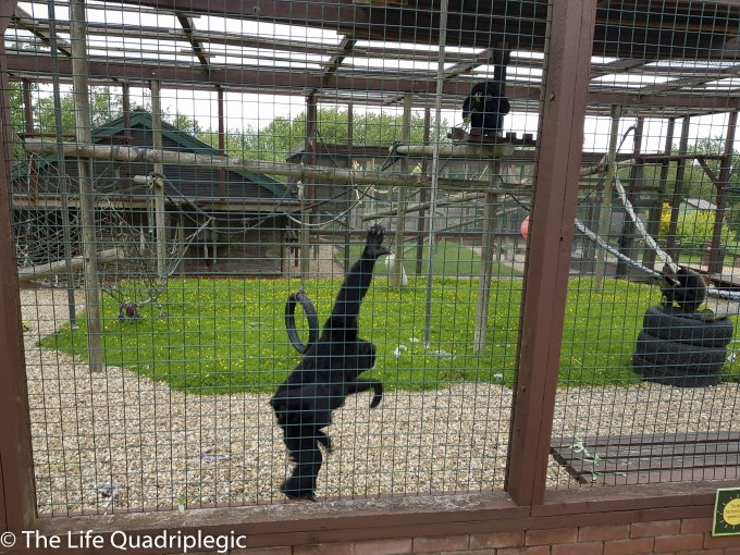 A monkey in a cage is holding onto the bars