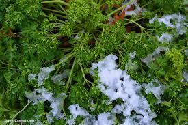 February ~ Seasonal Gardening Tasks & Tips