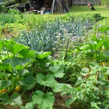 Through the Seasons in a Quadra Food Garden: Blog #11