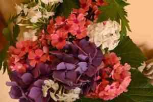 Tour de Plant - Quadra Island Garden Club Plant Sale @ Driveways Across Quadra Island - see below for addresses