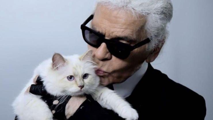 Karl - gato