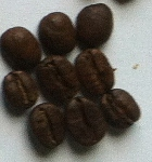 Roasting Coffee 2nd Crack Stage