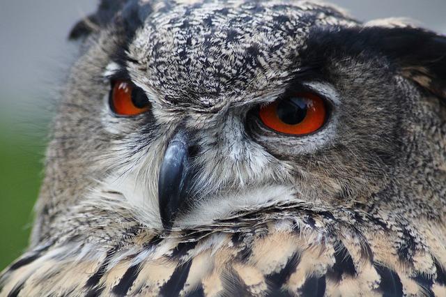 【ラッキーモチーフ】フクロウは『森の賢者』♪日本でも西洋でも学問のシンボル