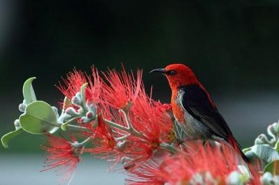 【ラッキーモチーフ】幸運を呼ぶ『鳥』モチーフ!種類別の意味や幸運のサインなど♪