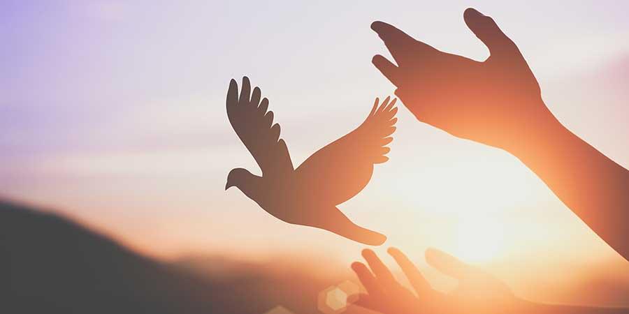 Spirit Rising Feature