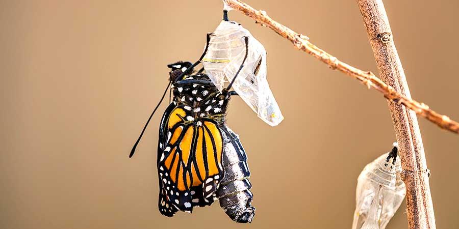 Passages Monarch Emerging