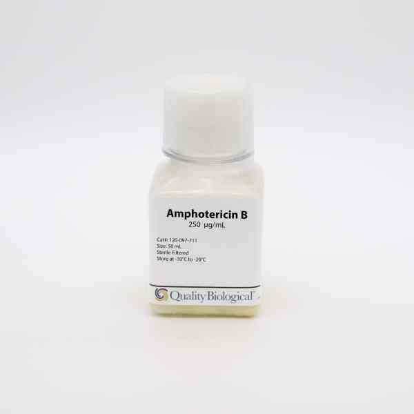 Amphotericin B 120-097-711