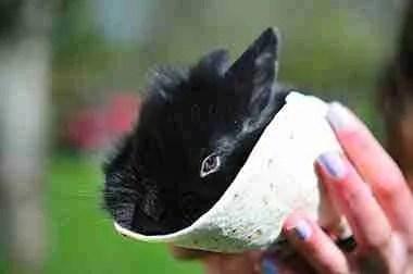 bunny wrapped in burrito