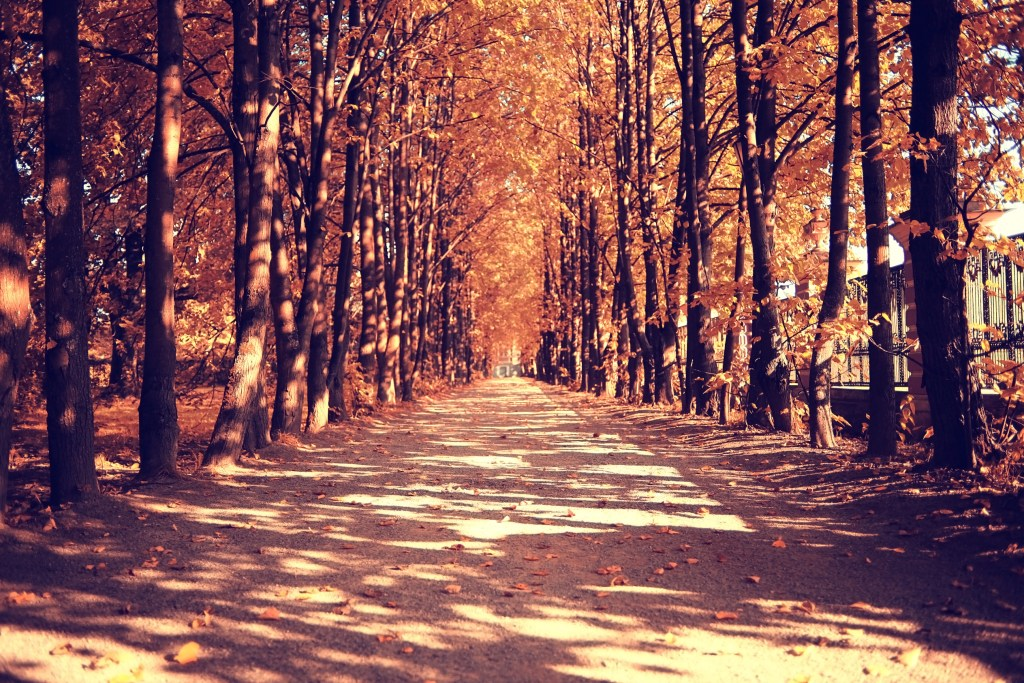 Drive Into Fall With These 9 Simple Tips