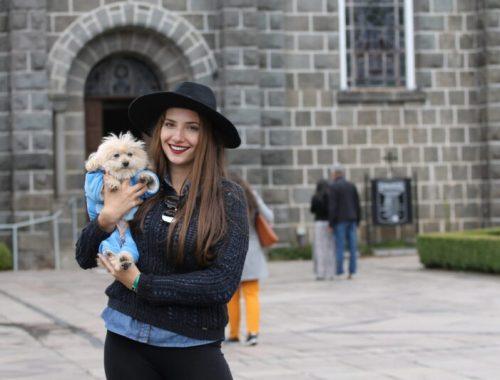 Viajar com Pet