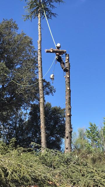 Billonnage du tronc d'arbre