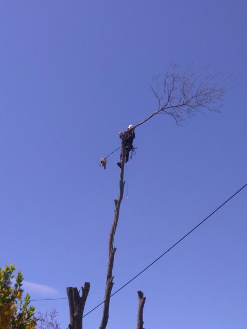 Démontage technique, contrôle de chute des branches