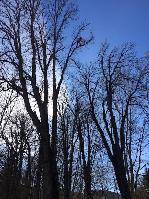 Quantacav-arboriste-elagueur-grimpe-taille arbre