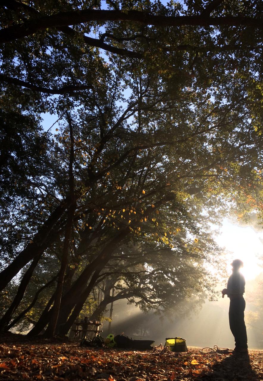 Quantacav-arboriste-visuelle-soleil