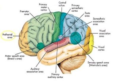 I10-80-prefrontal