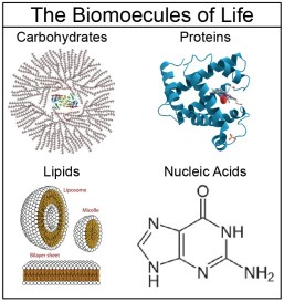 four-main-biomolecules