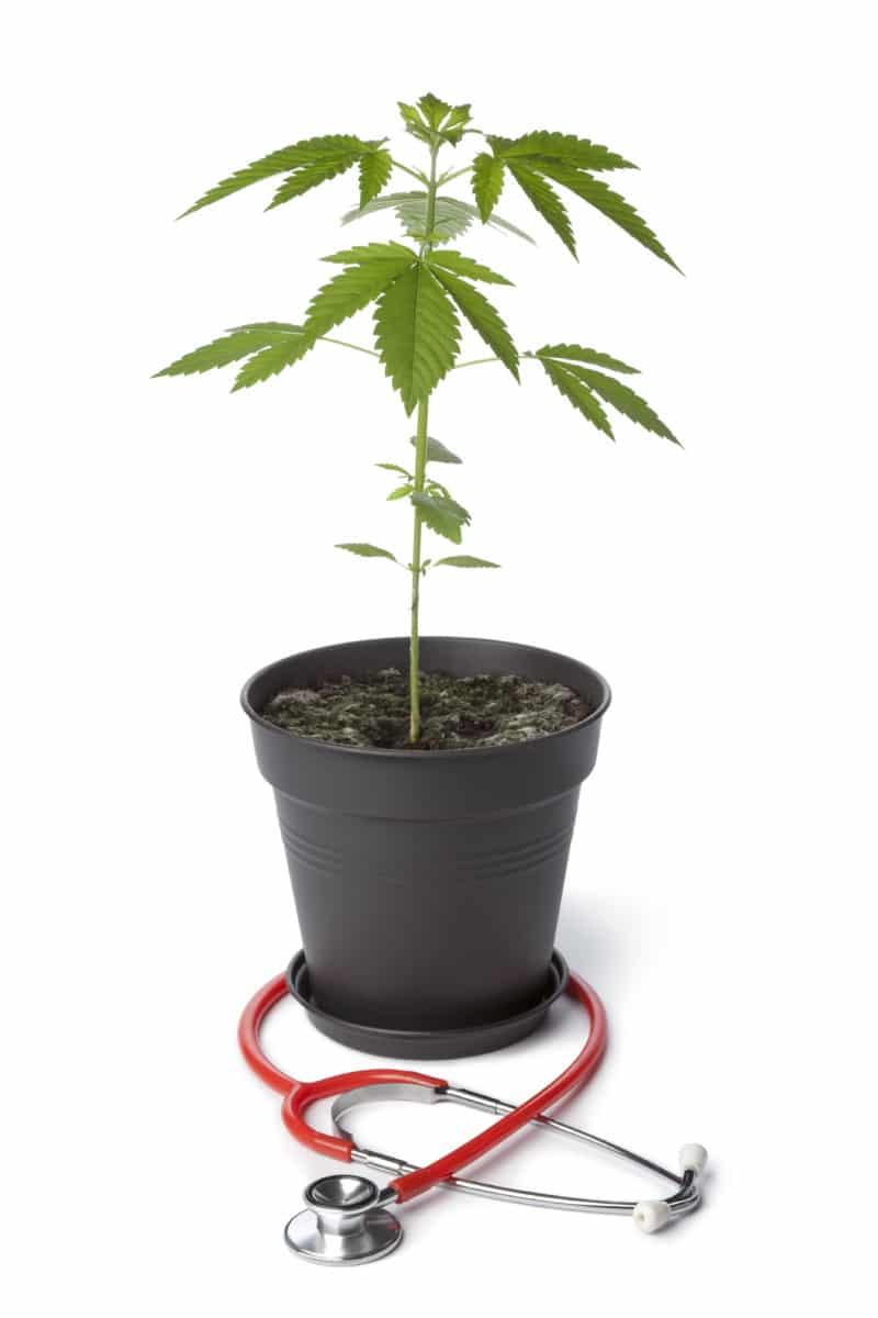 How to Get a Medical Marijuana Card in Michigan |