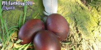 PFL Earthday 2011-6