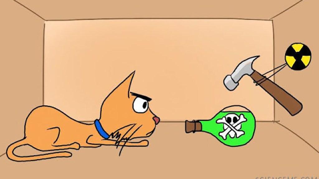 was schrodinger s cat
