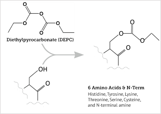 Diagram: DEPC labeling