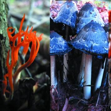 Mushroom compilation