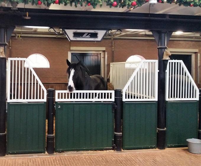 Cavalos Heineken Experience Amsterdã