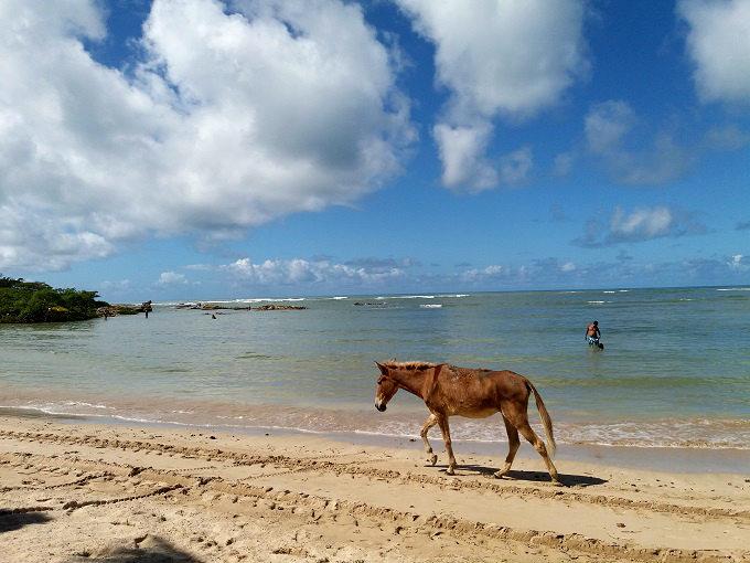Cavalo andando na Quarta Praia em Morro de SP