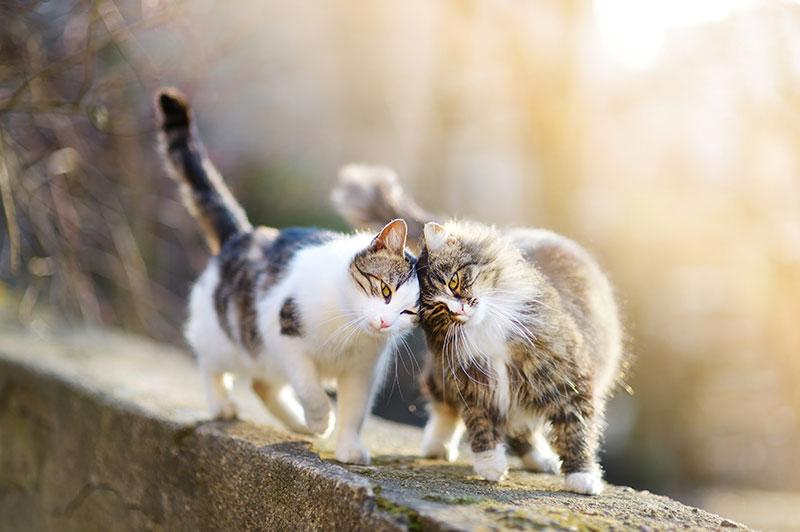 Un couple de chat