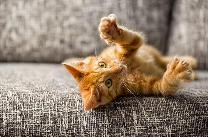 Comment tailles les griffes de mon chat ?