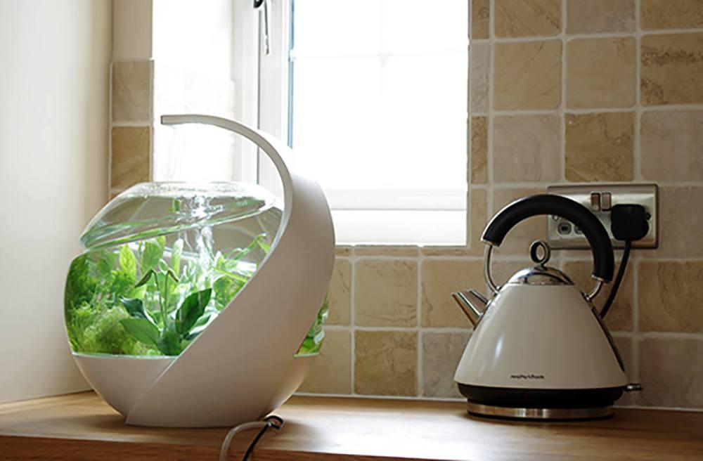 掃除の必要なし?セルフクリーニング水槽「Avo」を詳しく解説してみます