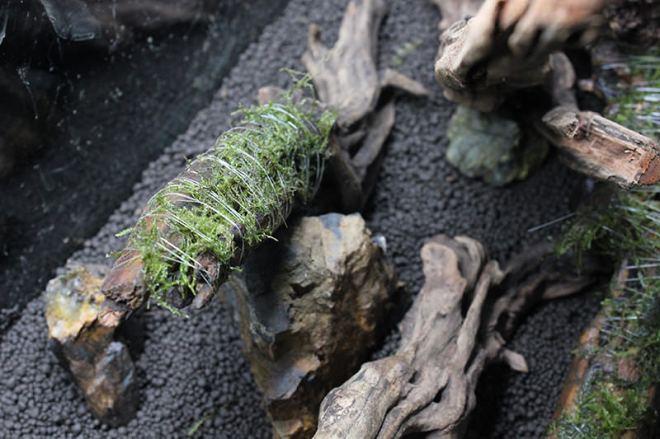 流木や岩などの角度を固定する